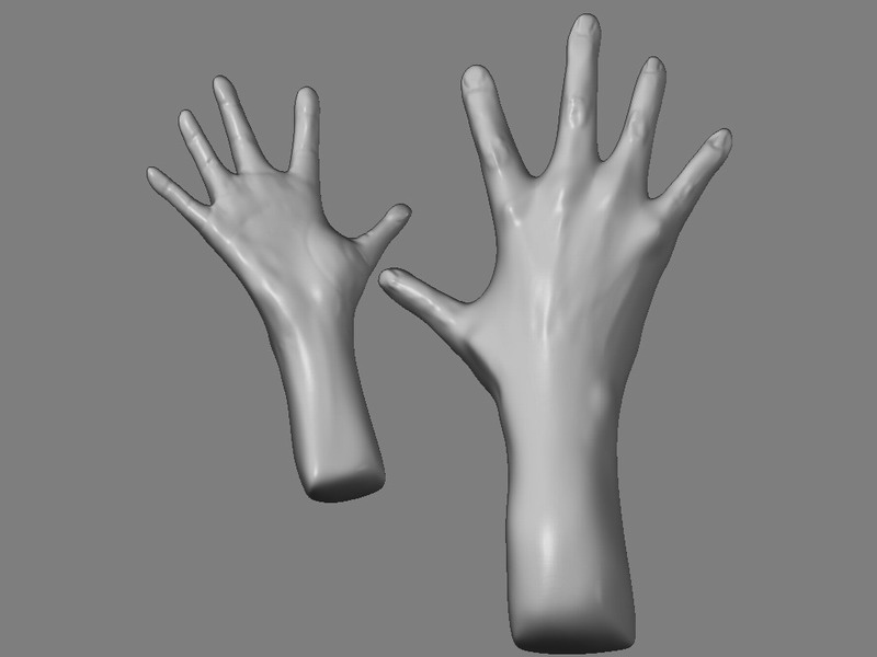 Human Hand Anatomy Peter Mikhael